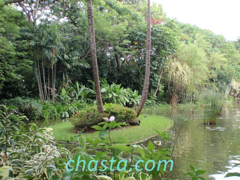 Le parc botanique de deshaies for Jardin botanique guadeloupe