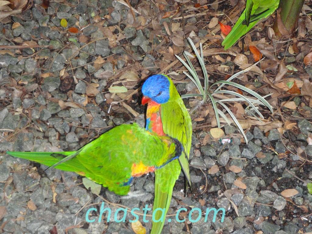 Le parc botanique de deshaies for Au jardin des colibris guadeloupe